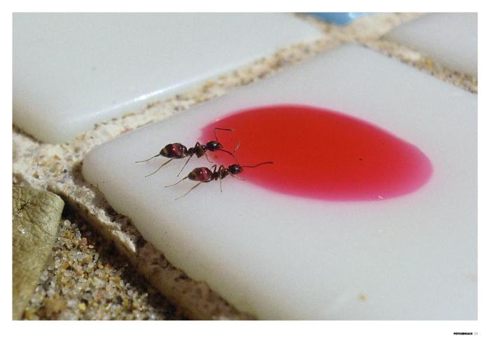 Hormigas mutantes
