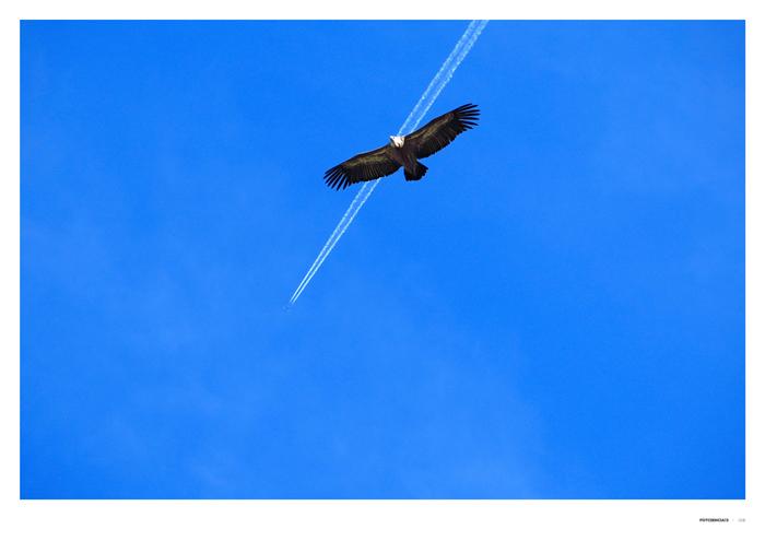 Doble vuelo: tecnología ornitológica milenaria y tecnología humana actual