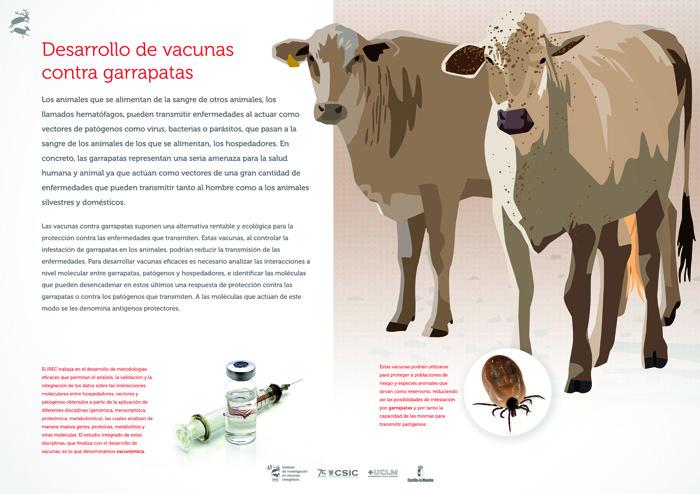 Desarrollo de vacunas contra garrapatas