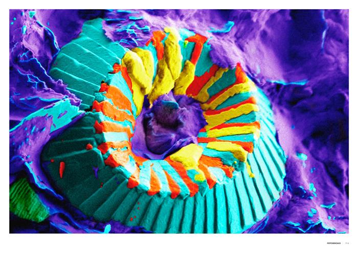 Cocolito fósil en un mar de polímero