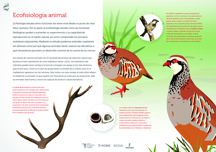 Ecofisiología animal