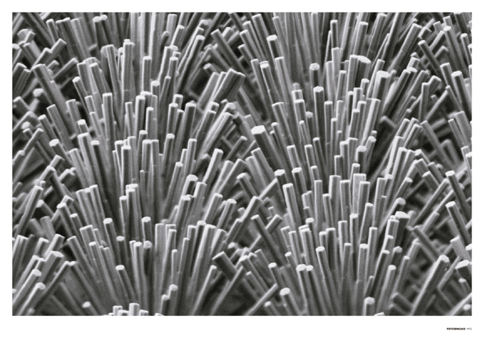 Jardín de nanohilos de óxido de zinc
