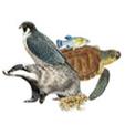 Enciclopedia vertebrados