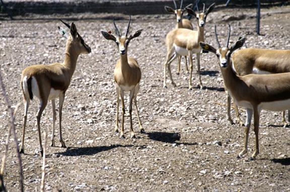 Parque de Rescate de la Fauna Sahariana de la Estación Experimental de Zonas Áridas